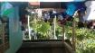 PELATIHAN  Budidaya Sayur Organik