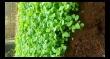 Warga Payangan Belajar Urban Farming