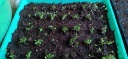 Kegiatan Urban Farming Di Kampung Payangan RW 07